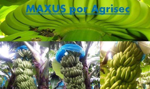 MAXUS-960×570