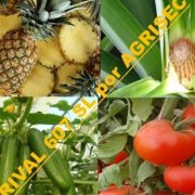 RESPECTBUL (mancozeb 640 g/kg + cymoxanil 80 g/kg WP)– yellow and