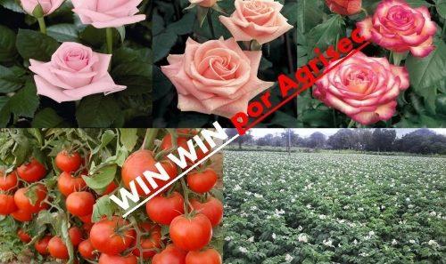 WIN-WIN-960×570